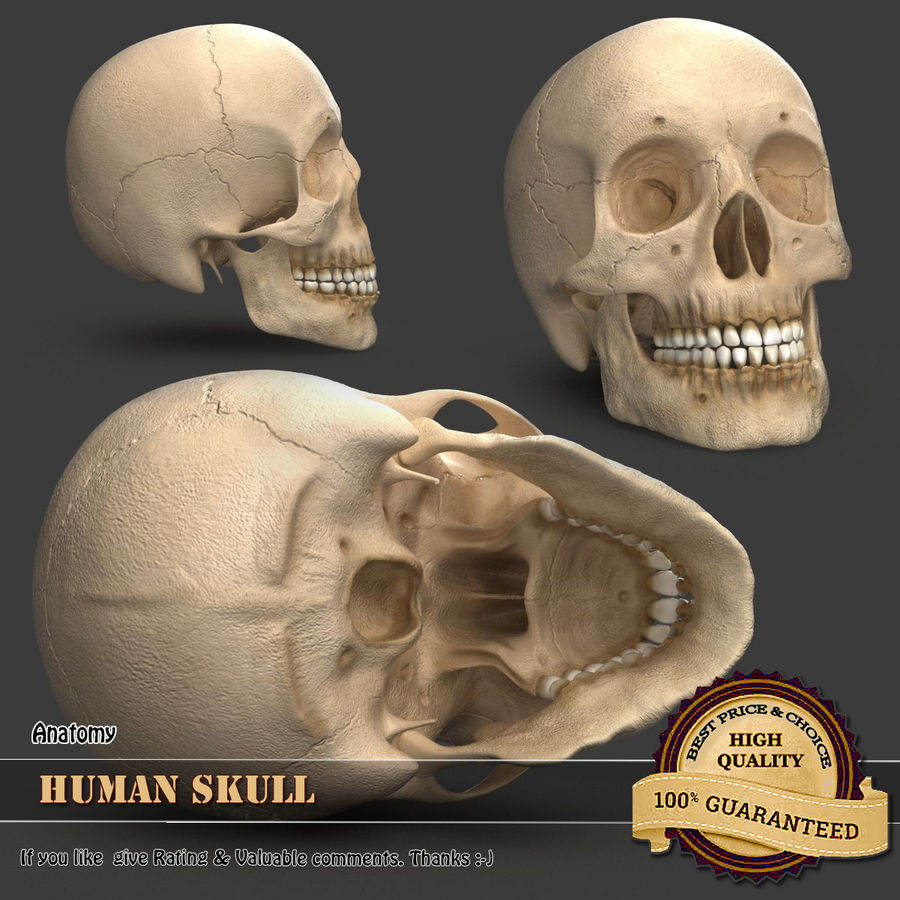 Human Skull royalty-free 3d model - Preview no. 1