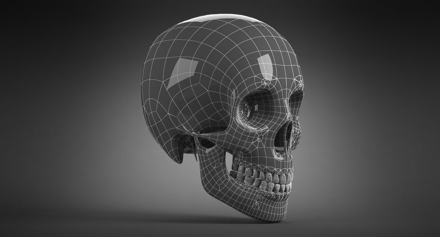 Human Skull royalty-free 3d model - Preview no. 23