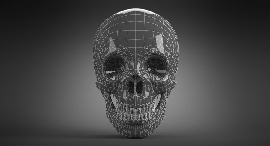 Human Skull royalty-free 3d model - Preview no. 21