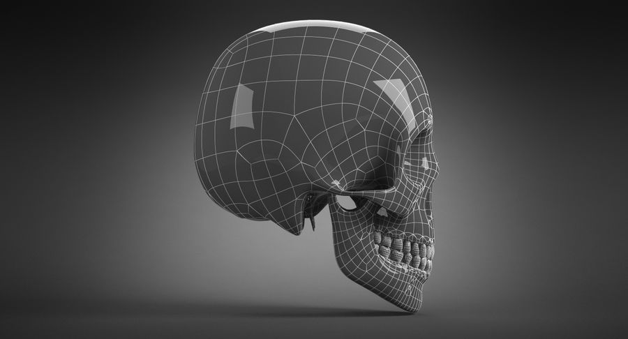 Human Skull royalty-free 3d model - Preview no. 24