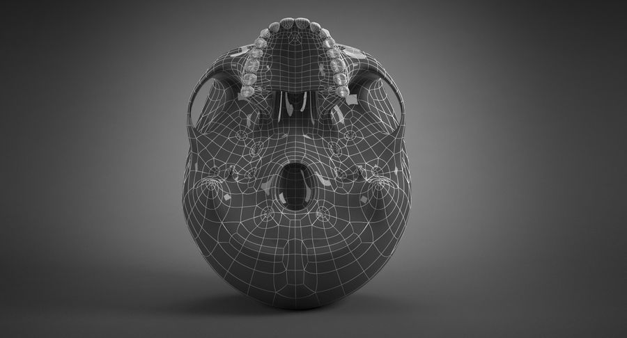 Human Skull royalty-free 3d model - Preview no. 27