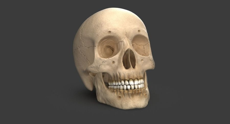 Human Skull royalty-free 3d model - Preview no. 2
