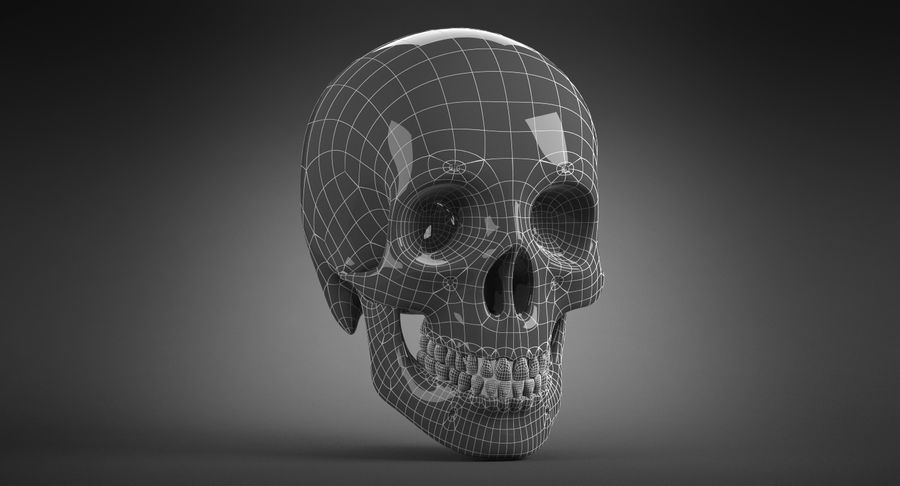 Human Skull royalty-free 3d model - Preview no. 22