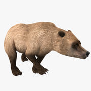 Pose de urso pardo 4 3d model