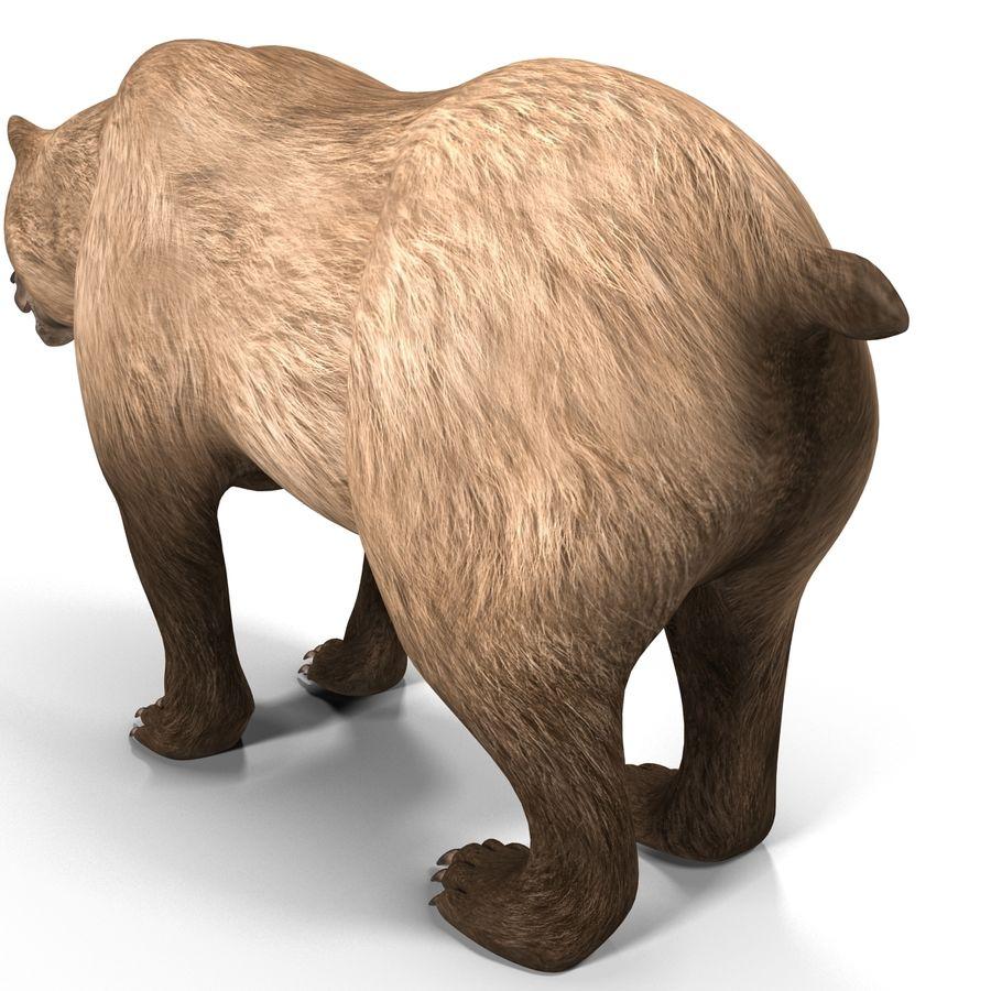 Niedźwiedź grizzly royalty-free 3d model - Preview no. 14