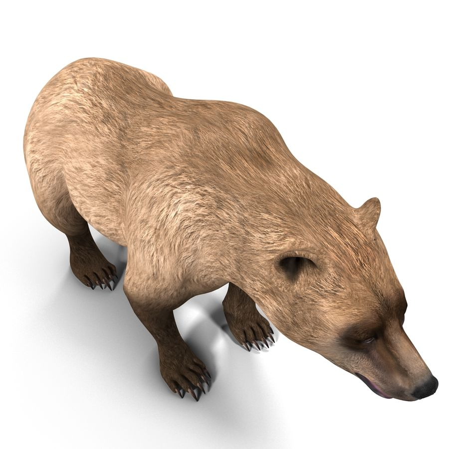Niedźwiedź grizzly royalty-free 3d model - Preview no. 9