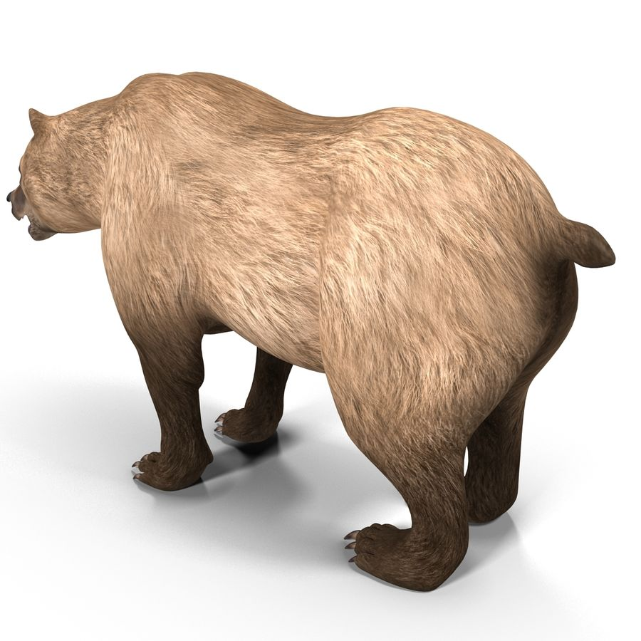 Niedźwiedź grizzly royalty-free 3d model - Preview no. 7