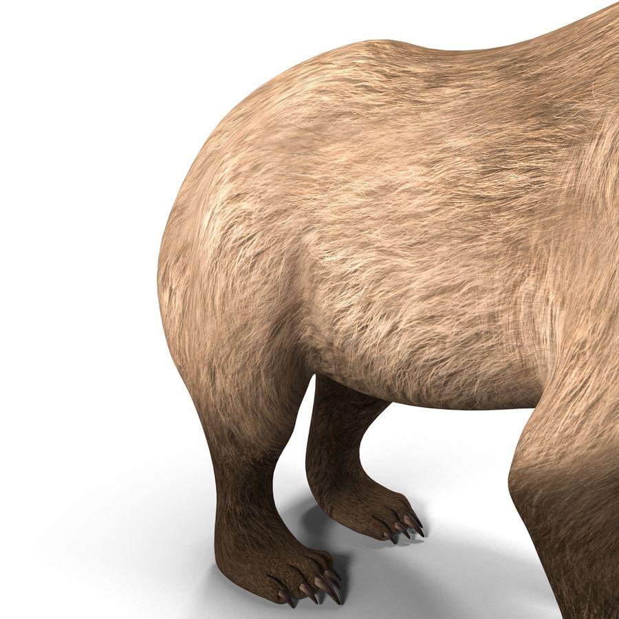 Niedźwiedź grizzly royalty-free 3d model - Preview no. 13