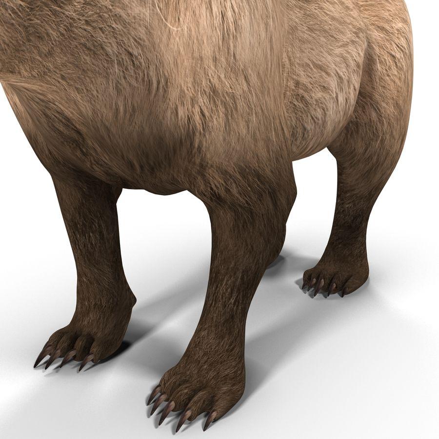 Niedźwiedź grizzly royalty-free 3d model - Preview no. 12