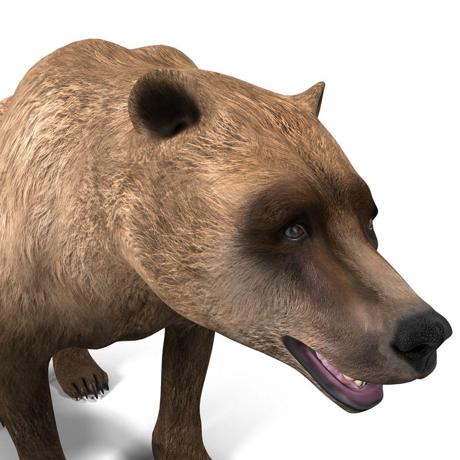 Niedźwiedź grizzly royalty-free 3d model - Preview no. 11