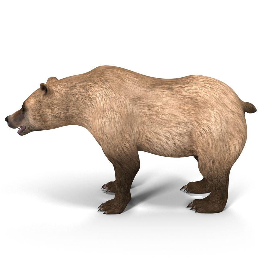 Niedźwiedź grizzly royalty-free 3d model - Preview no. 1