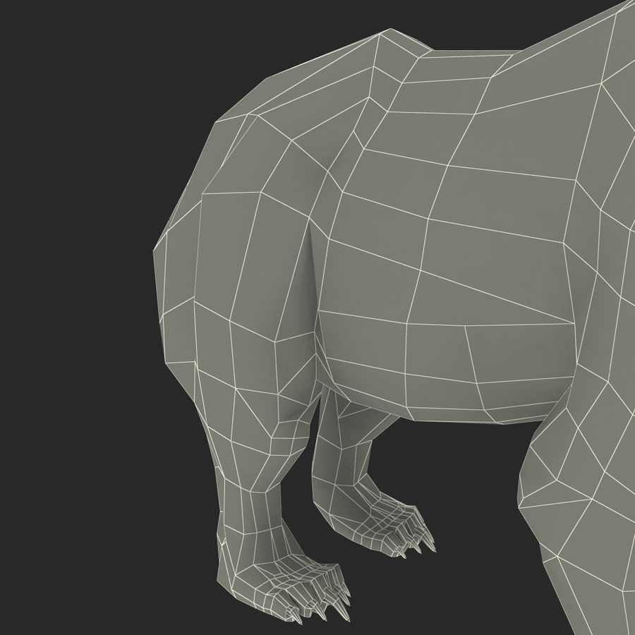Niedźwiedź grizzly royalty-free 3d model - Preview no. 19