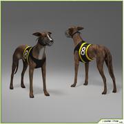 Köpek Tazı CG 3d model
