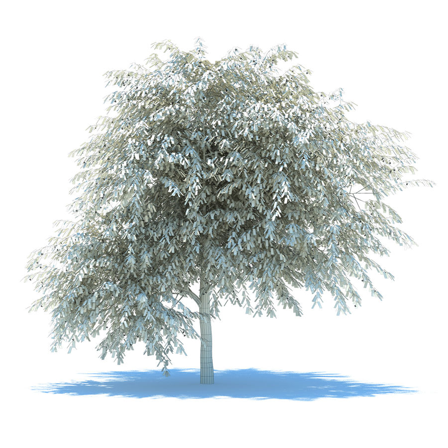Cherry tree blossomed royalty-free 3d model - Preview no. 6