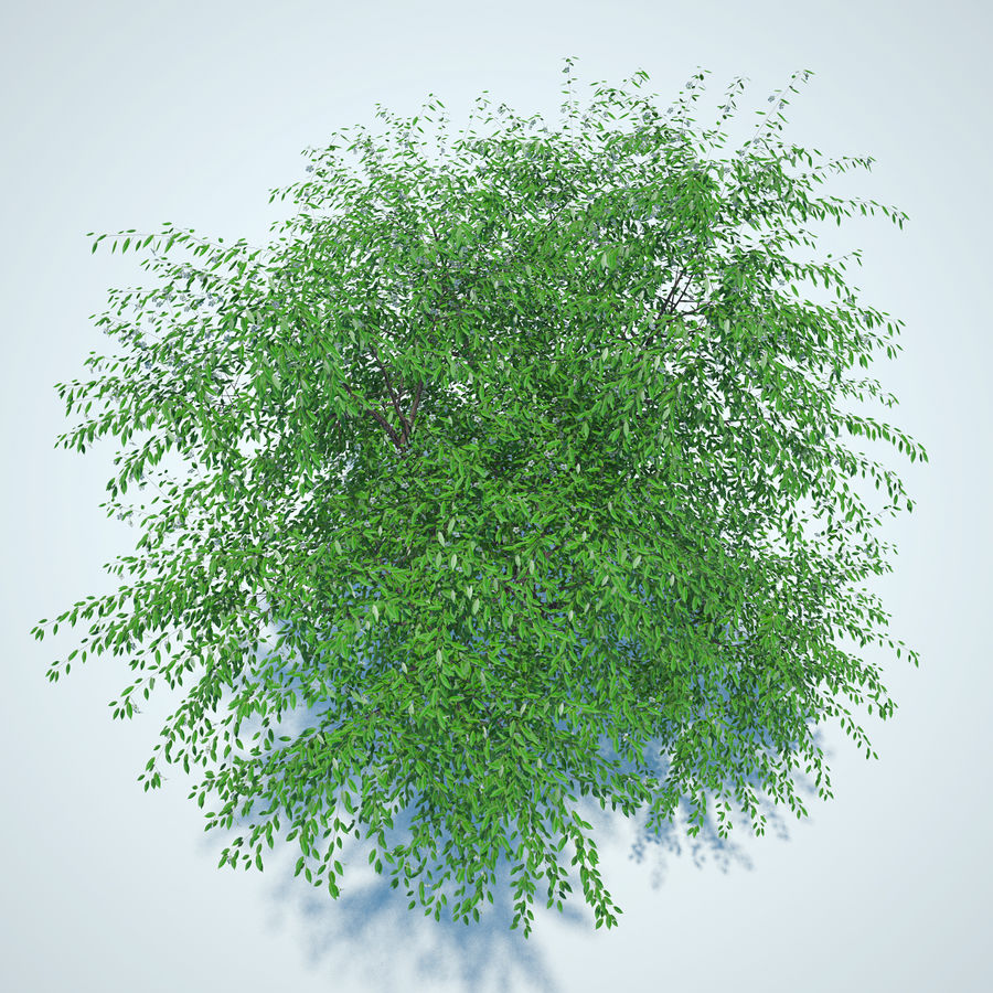 Cherry tree blossomed royalty-free 3d model - Preview no. 4