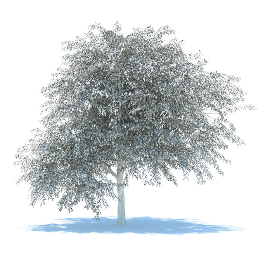 Cherry tree blossomed royalty-free 3d model - Preview no. 7