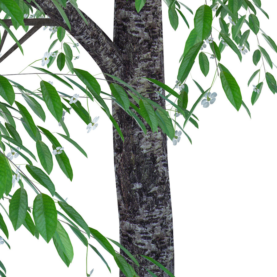 Cherry tree blossomed royalty-free 3d model - Preview no. 3