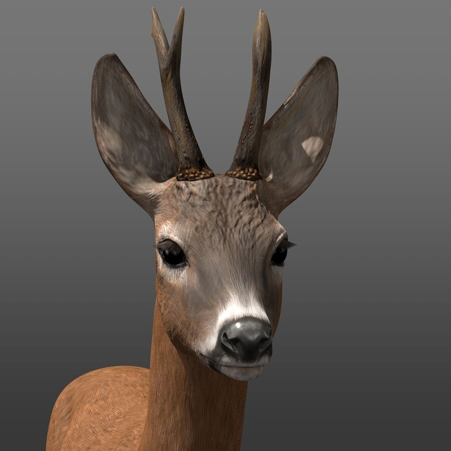 Roe-Deer-Buck royalty-free 3d model - Preview no. 3