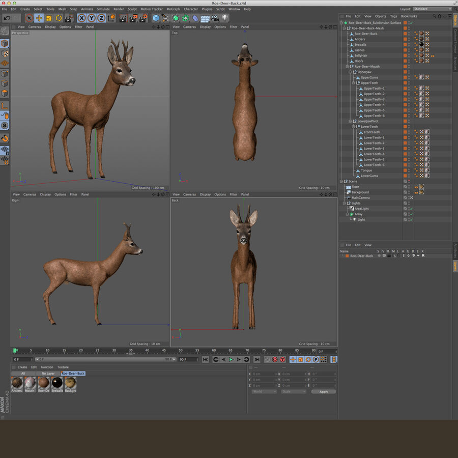 Roe-Deer-Buck royalty-free 3d model - Preview no. 20