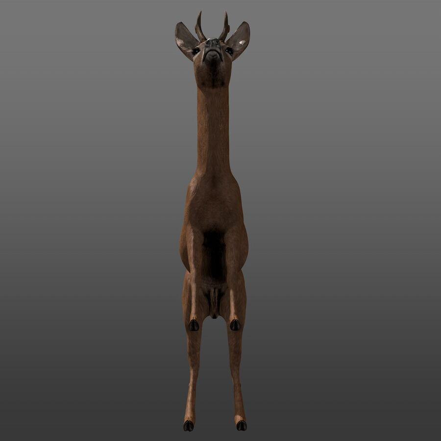 Roe-Deer-Buck royalty-free 3d model - Preview no. 8