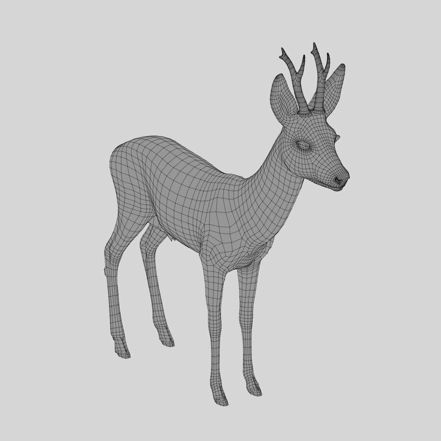 Roe-Deer-Buck royalty-free 3d model - Preview no. 13