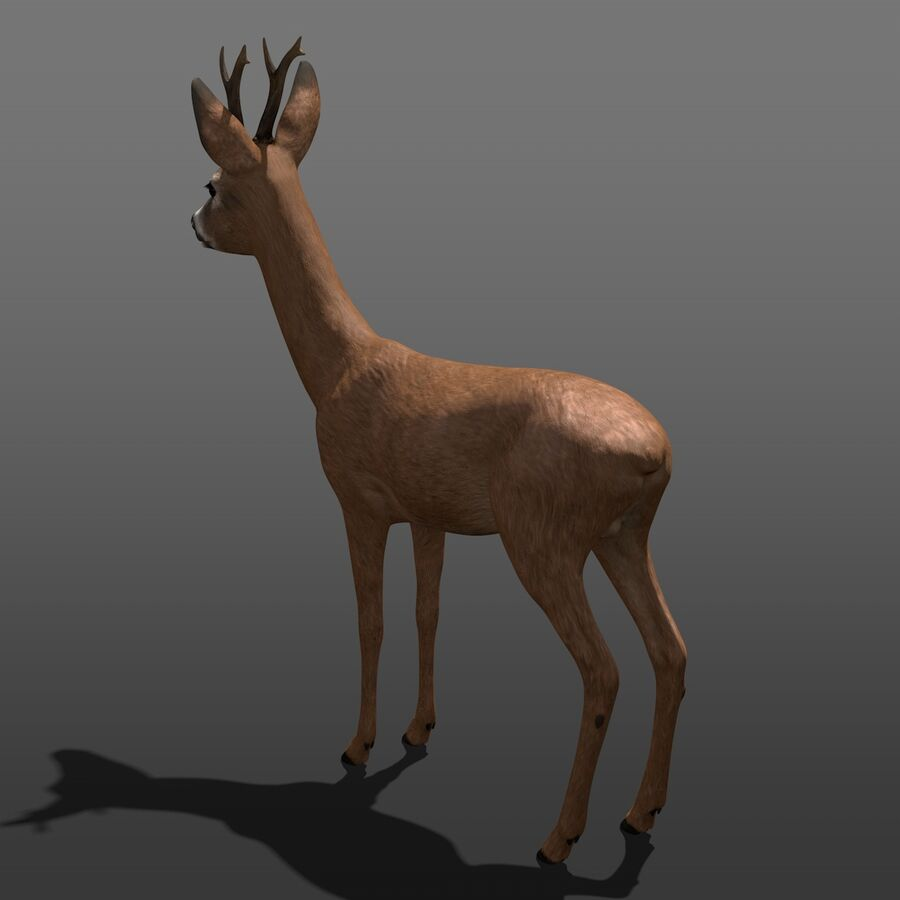 Roe-Deer-Buck royalty-free 3d model - Preview no. 6