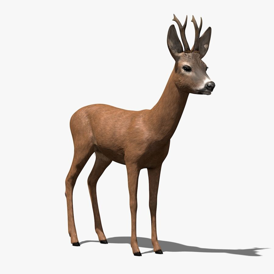 Roe-Deer-Buck royalty-free 3d model - Preview no. 1