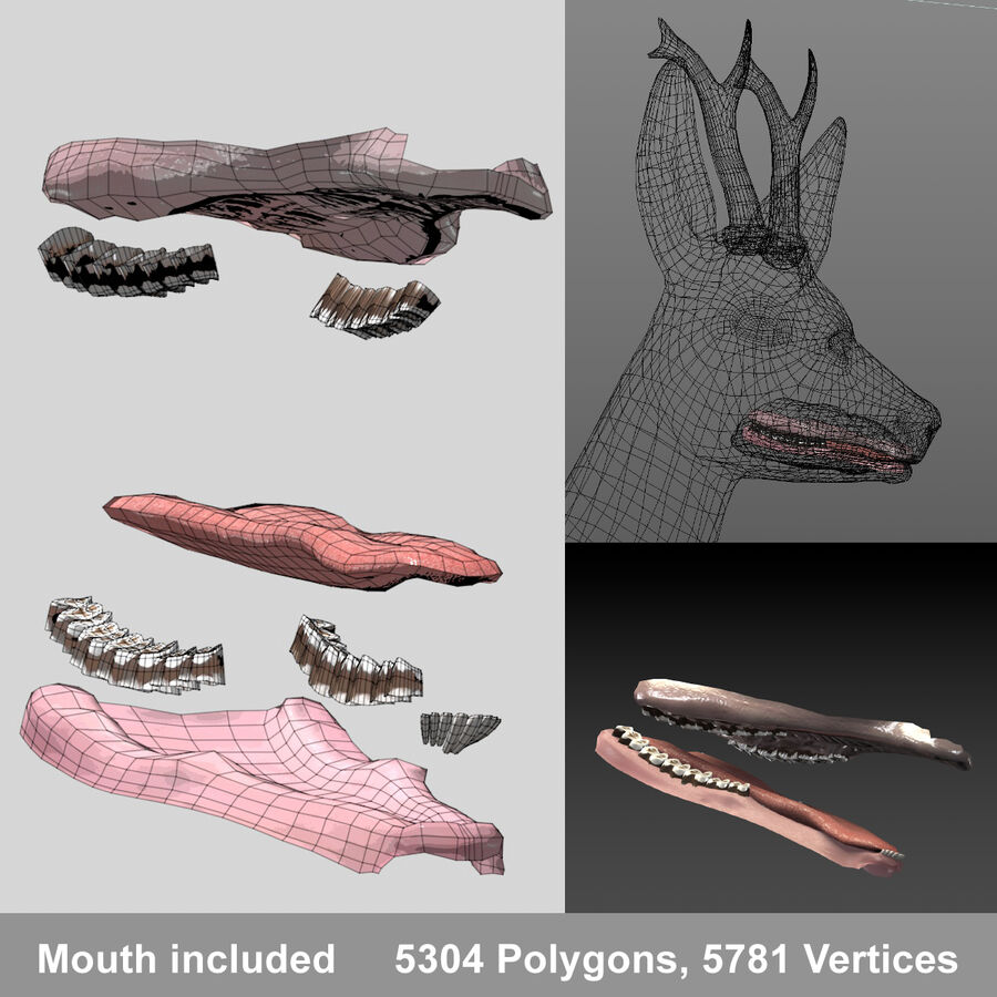 Roe-Deer-Buck royalty-free 3d model - Preview no. 4