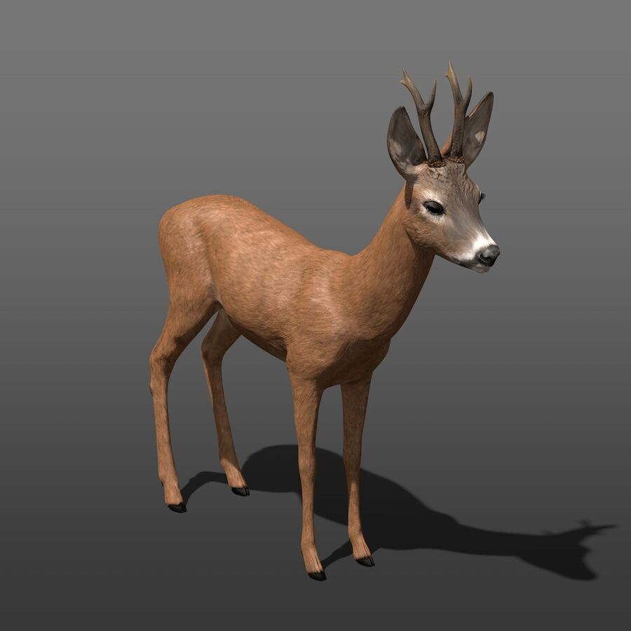 Roe-Deer-Buck royalty-free 3d model - Preview no. 5
