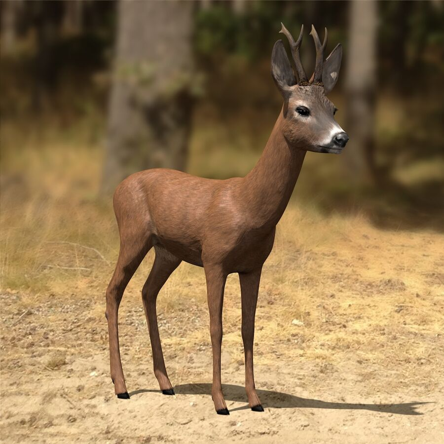 Roe-Deer-Buck royalty-free 3d model - Preview no. 2