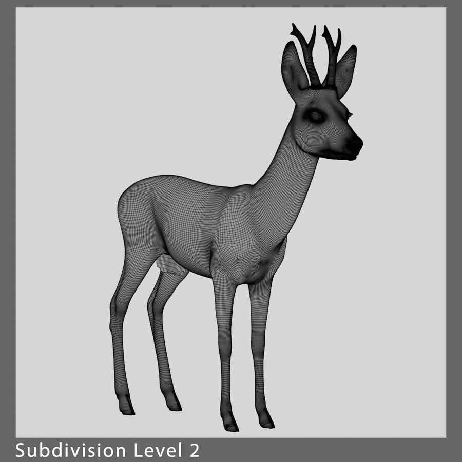 Roe-Deer-Buck royalty-free 3d model - Preview no. 11
