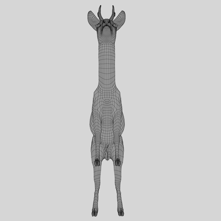 Roe-Deer-Buck royalty-free 3d model - Preview no. 16
