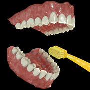 Les dents 3d model