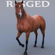 At Gerçekçi ve DÜZENLİ 3d model