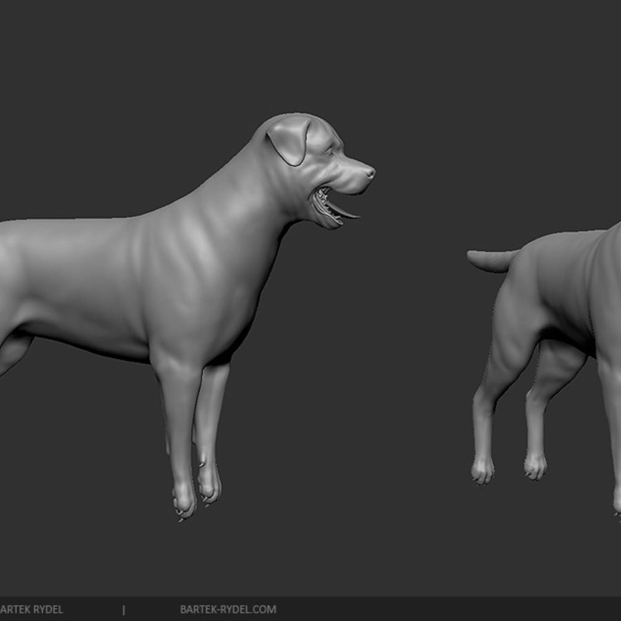 Exelent Dog Anatomy 3d Sketch Physiology Of Human Body Images