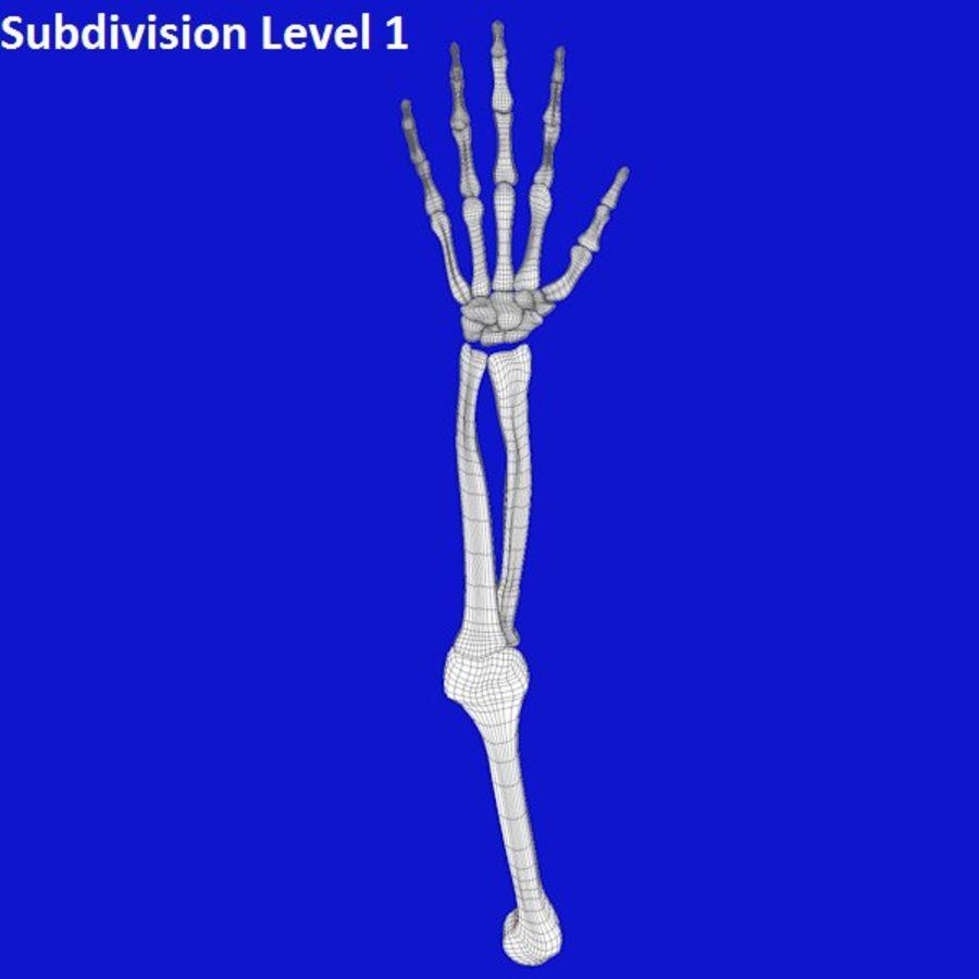 Zombie Skeleton Arm 3d Model 19 Obj Fbx C4d 3ds Free3d