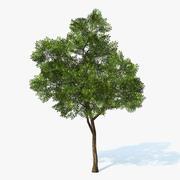 Tree Generic 03 3d model