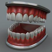 Human Jaw 3d model