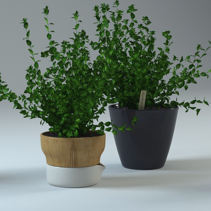 Oregano royalty-free 3d model - Preview no. 3