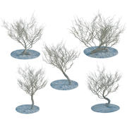 Desert Dry Trees Or Bushes Collection 3d model