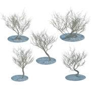 干灌木丛 3d model