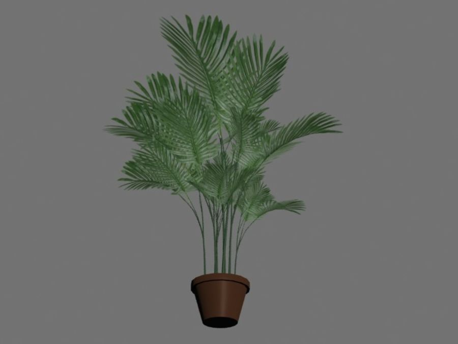 Pot with palm tree royalty-free 3d model - Preview no. 4
