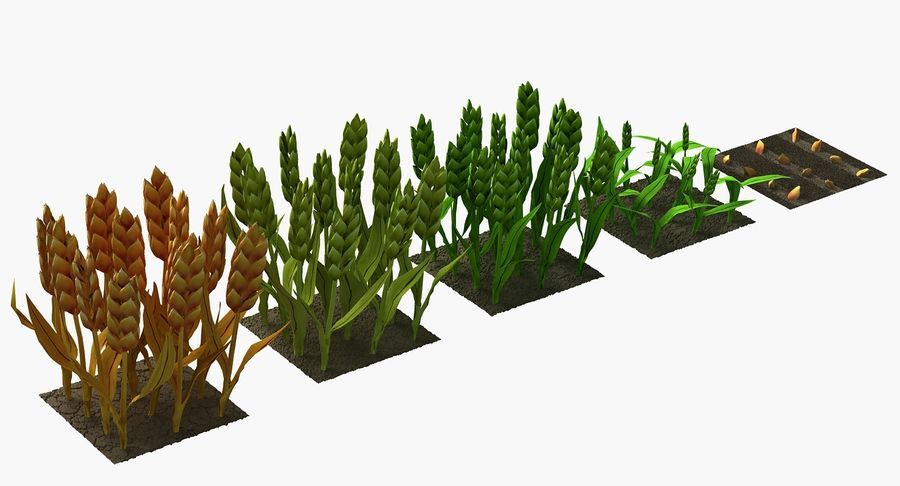 Barley cartoon (stages of grow) royalty-free 3d model - Preview no. 5