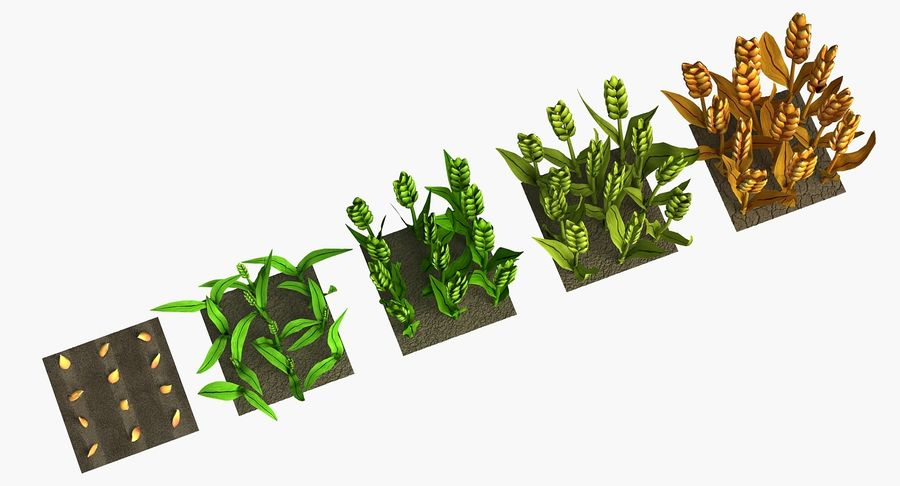 Barley cartoon (stages of grow) royalty-free 3d model - Preview no. 8