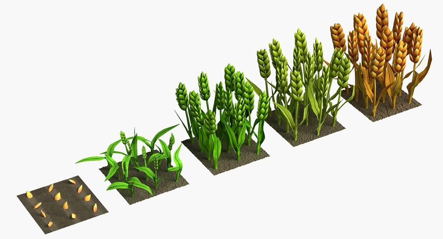 Barley cartoon (stages of grow) royalty-free 3d model - Preview no. 3