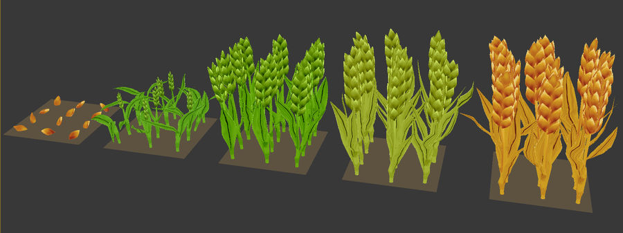 Barley cartoon (stages of grow) royalty-free 3d model - Preview no. 9