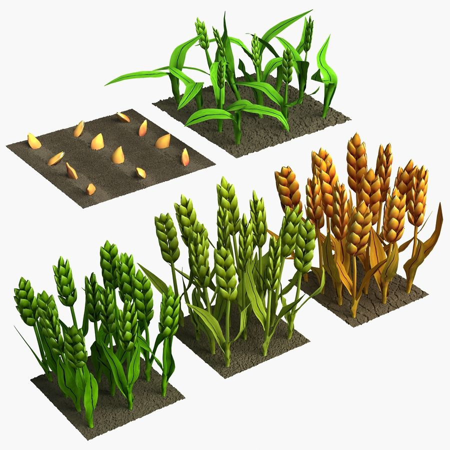 Barley cartoon (stages of grow) royalty-free 3d model - Preview no. 1