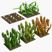 Cartone d'orzo (fasi di crescita) 3d model