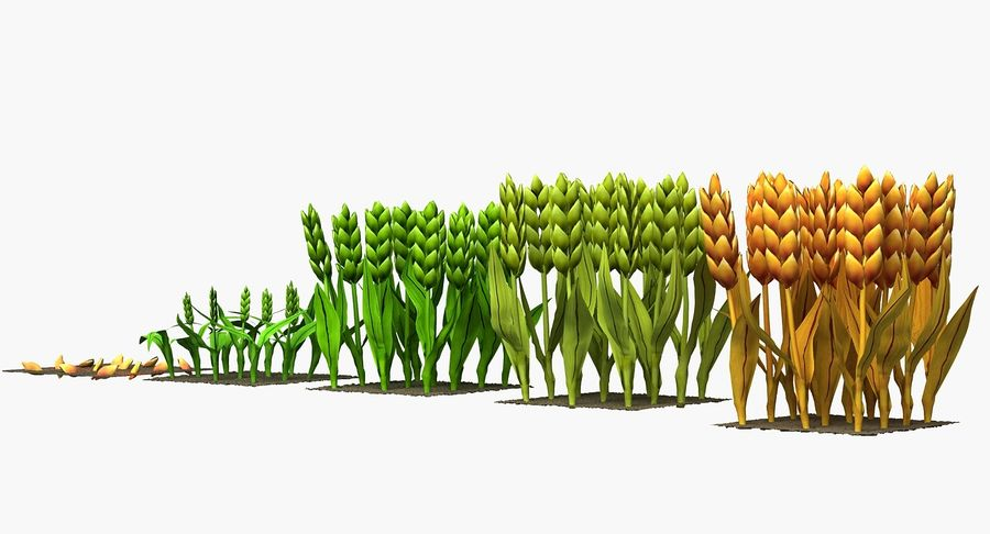 Barley cartoon (stages of grow) royalty-free 3d model - Preview no. 6