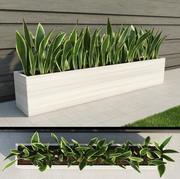 Planta de interior y exterior 3 modelo 3d